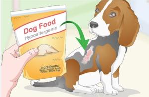 بهترین غذای سگ