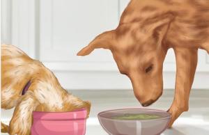 غذاخوری سگ
