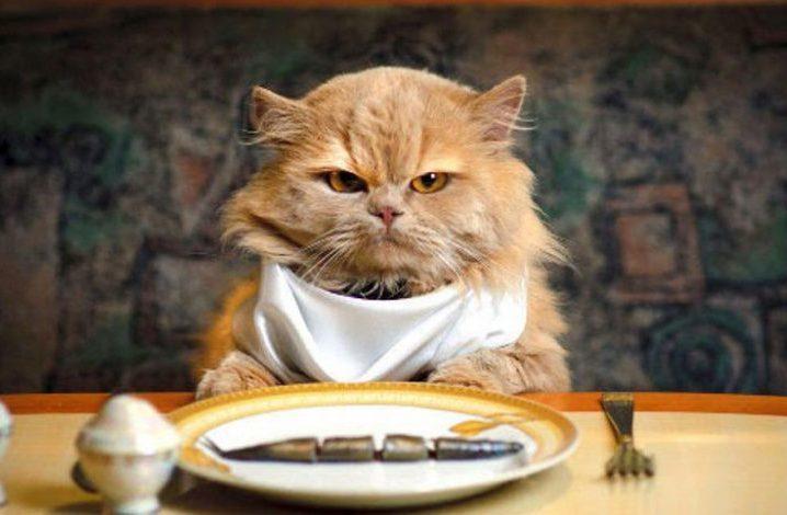 غذای گربه سالم