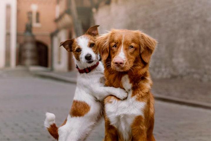 نکات مهمی که باید قبل از خرید سگ بدانیم؟