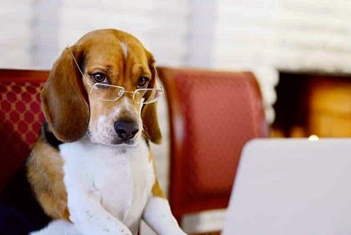 چطور باعث افزایش شادابی و باهوش تر شدن سگ خانگی خود شویم؟