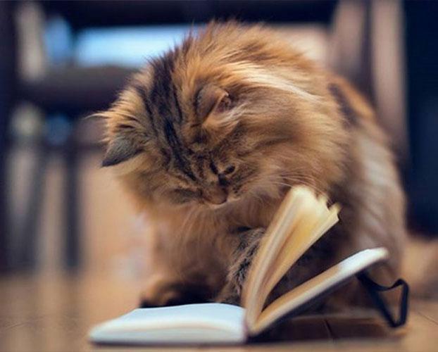 خانگی کردن گربه 1