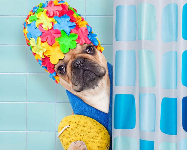 چگونه سگ را بشوییم 1