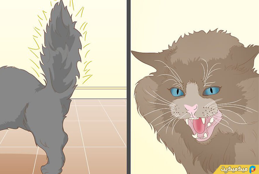 خانی کردن گربه