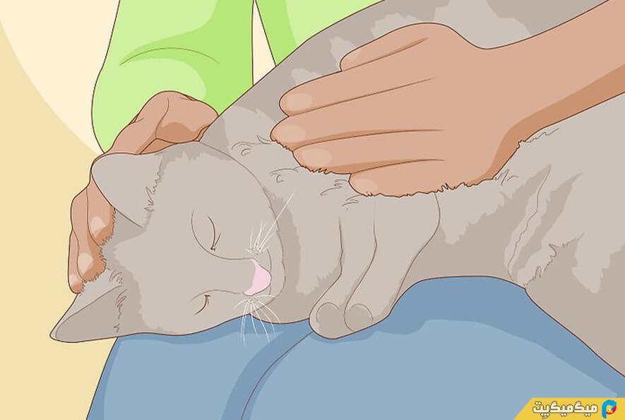 خانگی کردن گربه