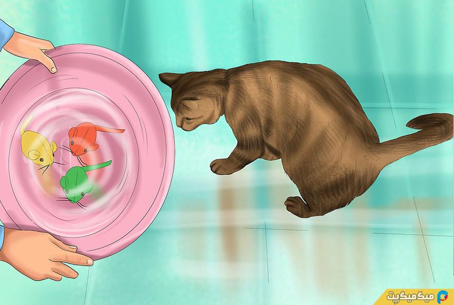 چگونه گربه خود را حمام کنیم؟