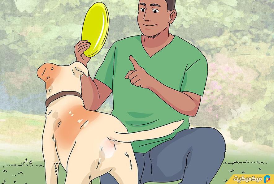 آموزش هایی را که حتما باید به سگ خانگی خود یاد بدهید؟