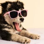 آموزش-سگ-خانگی