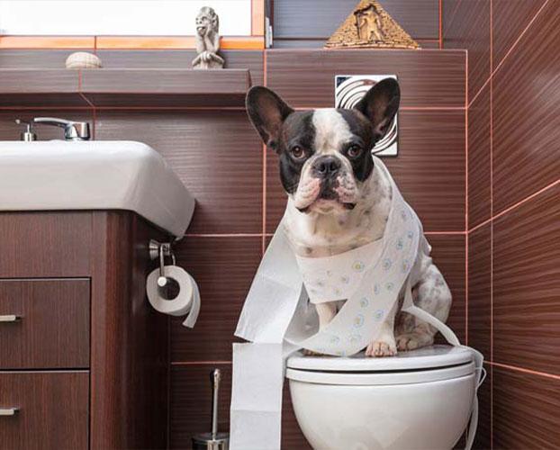 دستشویی رفتن سگ ها 1