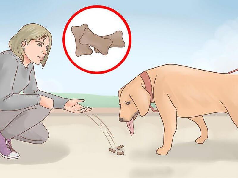 ارتباط با سگ