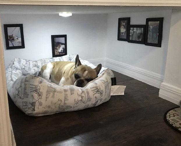 جای خواب سگ 1