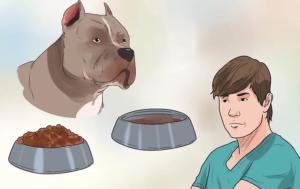 تغییر غذای سگ