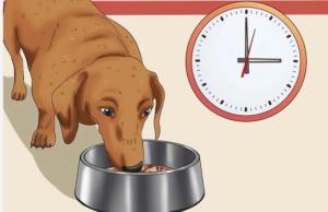 غذای خشک سگ