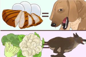 غذای خانگی سگ