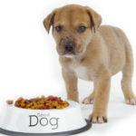 غذای سالم سگ