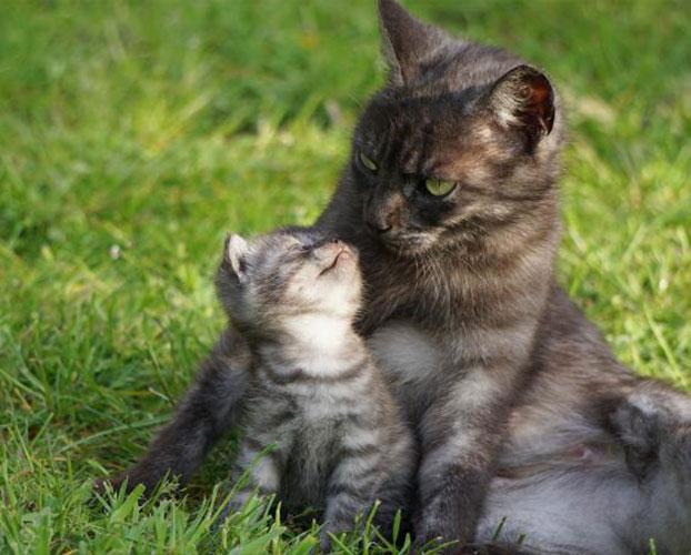 سن گربه ها 1