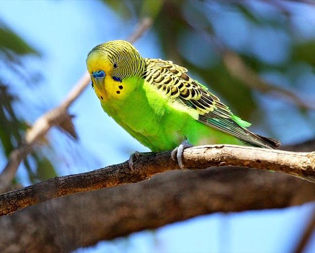 پرنده های سخن گو 1