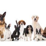 باهوش ترین نژاد سگ دنیا