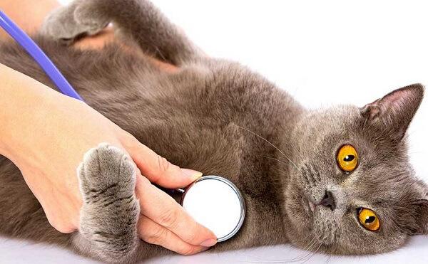تشخیص سن گربه