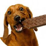 غذای ممنوعه سگ
