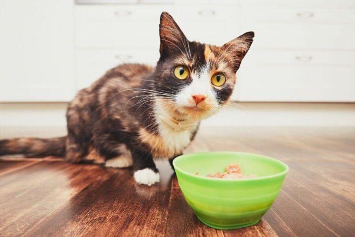 غذای خام گربه