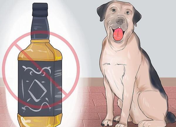 غذای مضر برای سگ