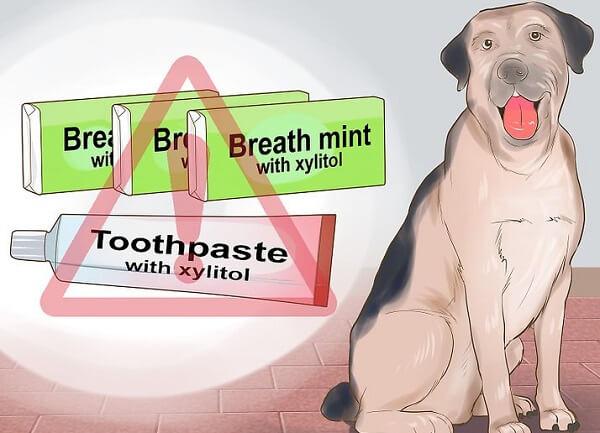 سگ چه غذایی نباید بخورد