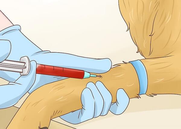آزمایش خون سن سگ
