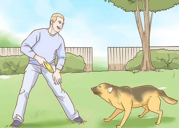 بیداری سگ