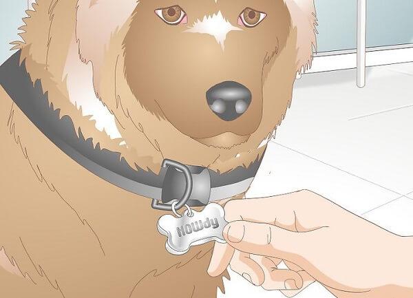 ساخت قلاده سگ