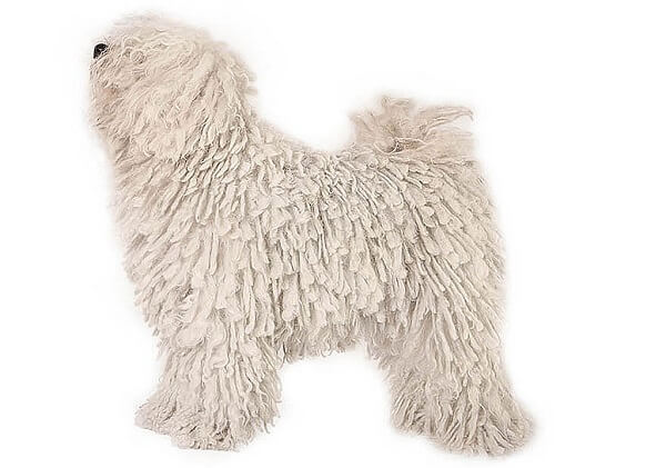 سگ پول
