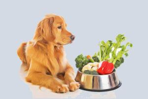 بهترین غذای سگ نگهبان