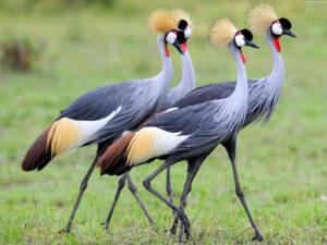 انواع پرنده