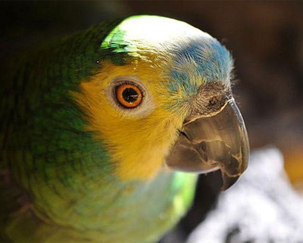 افسردکی پرنده 1