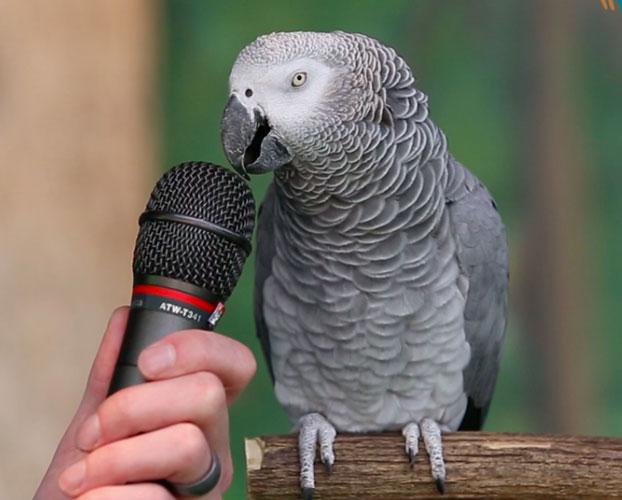 حرف زدن با طوطی 1