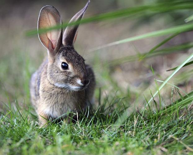خرگوش 1