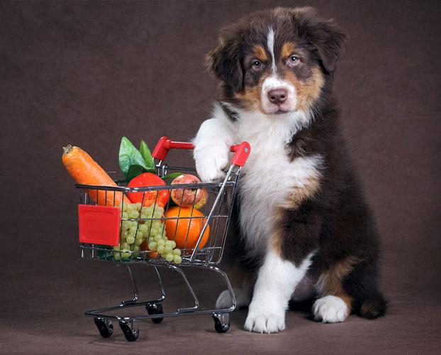 سگ گیاه خوار و میوه و سبزیجات مناسب سگ