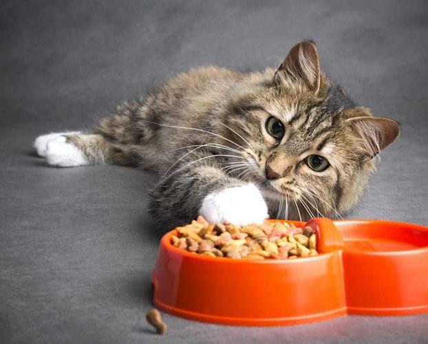 غذای گربه 1
