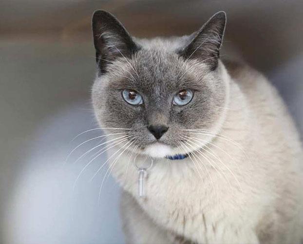 گربه های محبوب 1