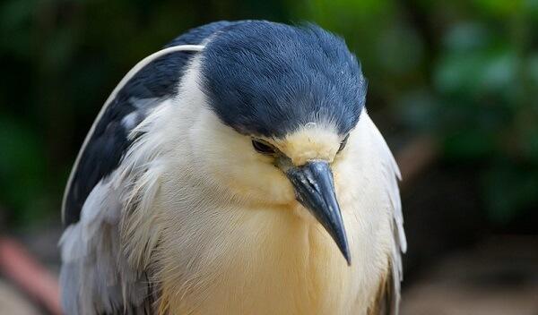 علائم افسردگی پرنده