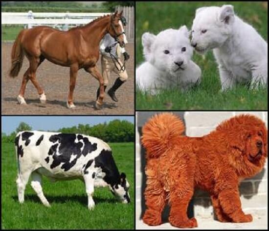 گران قیمتترین حیوانات خانگی جهان