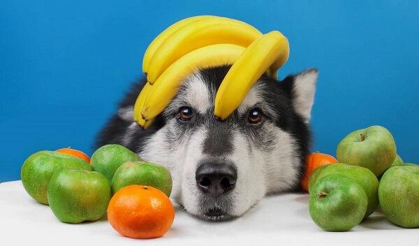 میوه و سبزیجات مناسب سگ