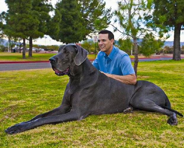 بزرگترین سگ ها 1