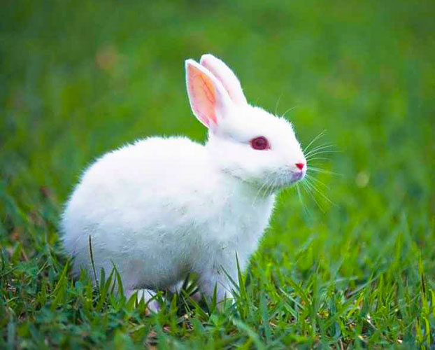بهترین خرگوش 1