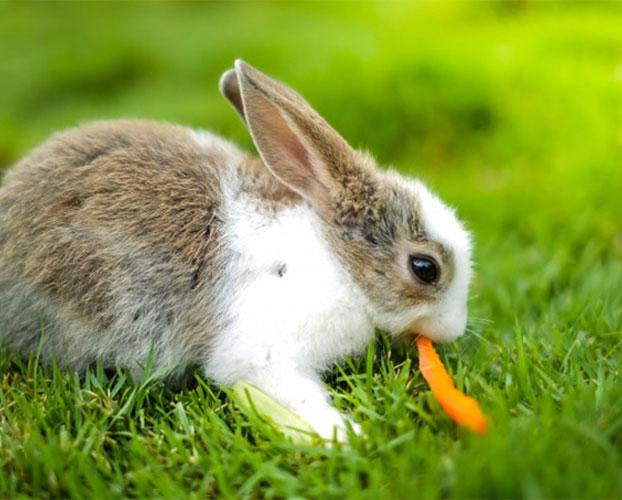 هویج و خرگوش 1