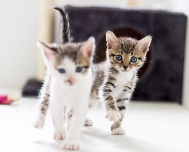 گربه ها 1