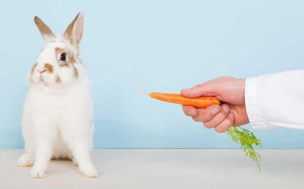 تغذیه خرگوش