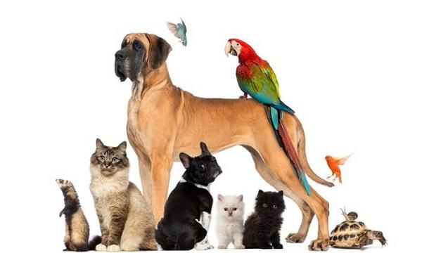 بیماری مشترک انسان و حیوانات