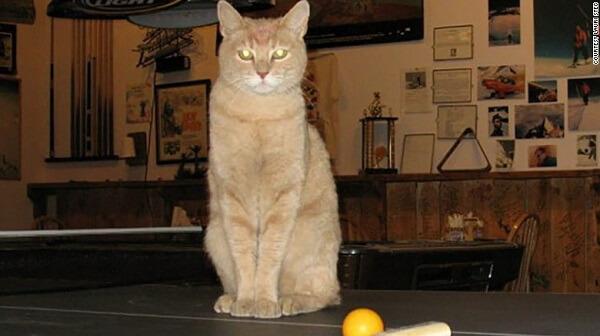 ثروت مند ترین گربه دنیا
