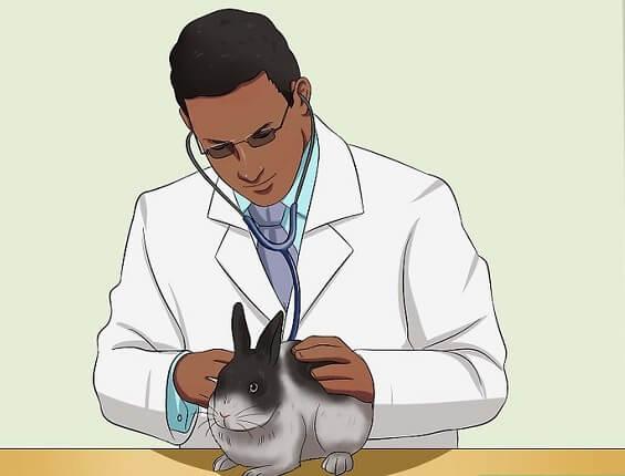 بررسی علائم بیماری خرگوش